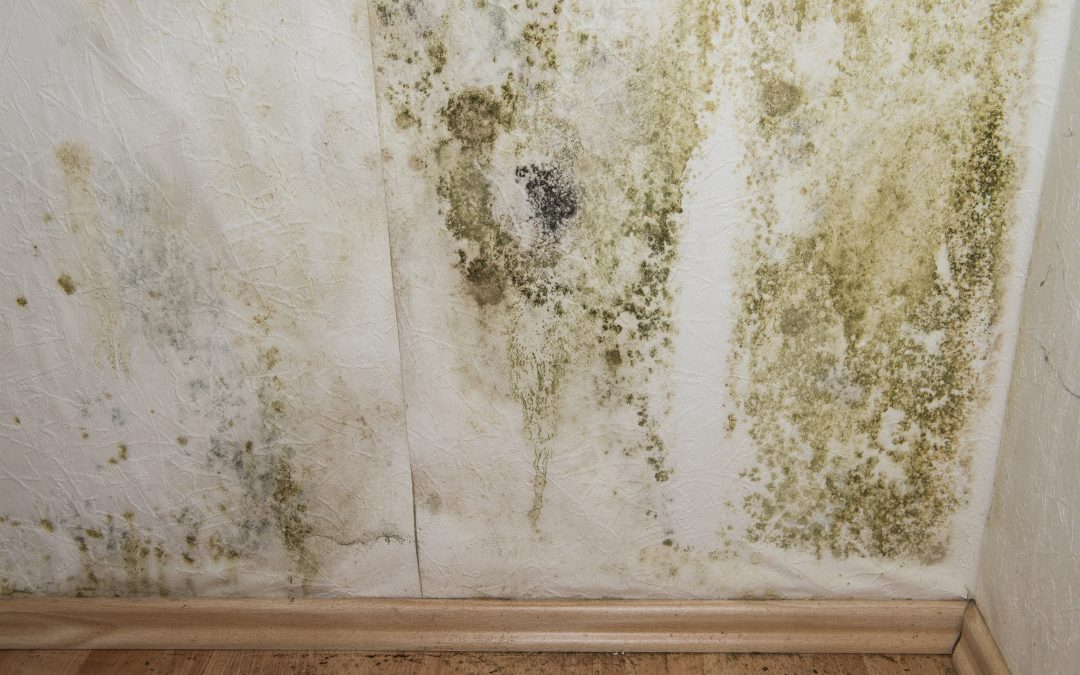 5 Ways to Keep Mold At Bay In Your Home